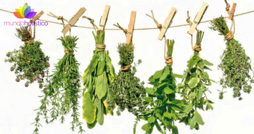 Herbolaría prehispánica y su poder curativo
