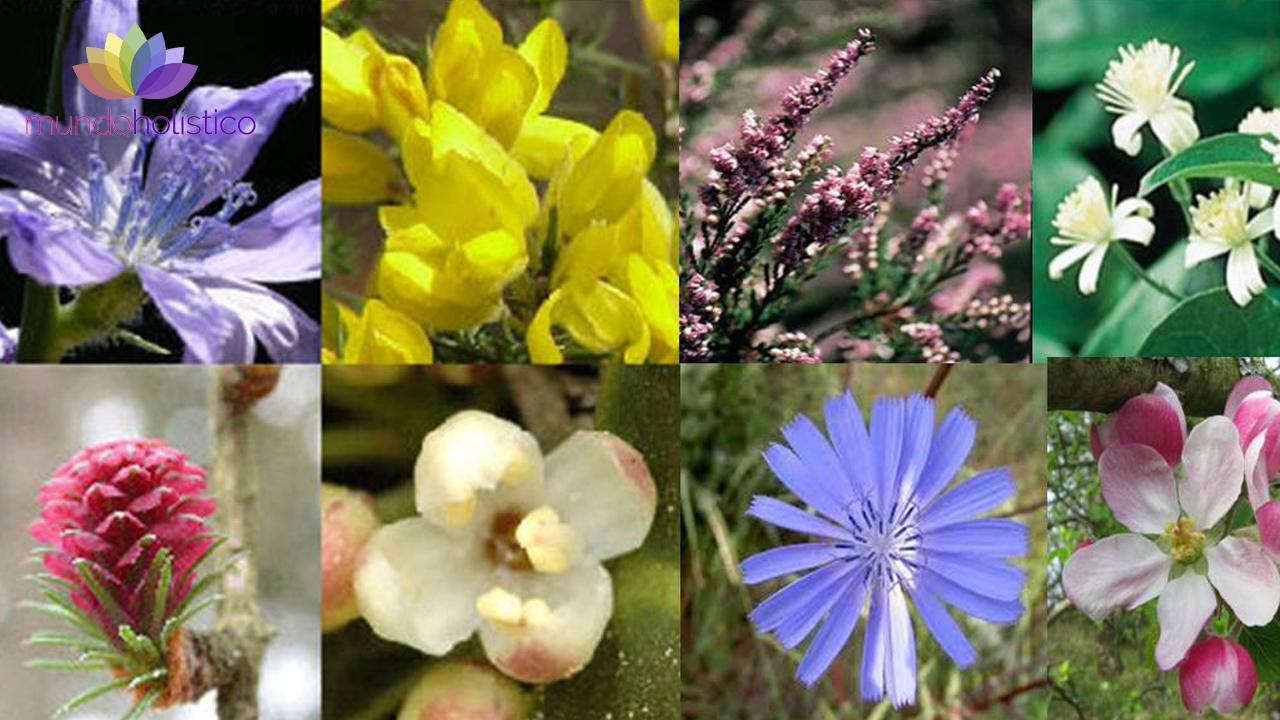 Terapia Floral y sus 38 remedios