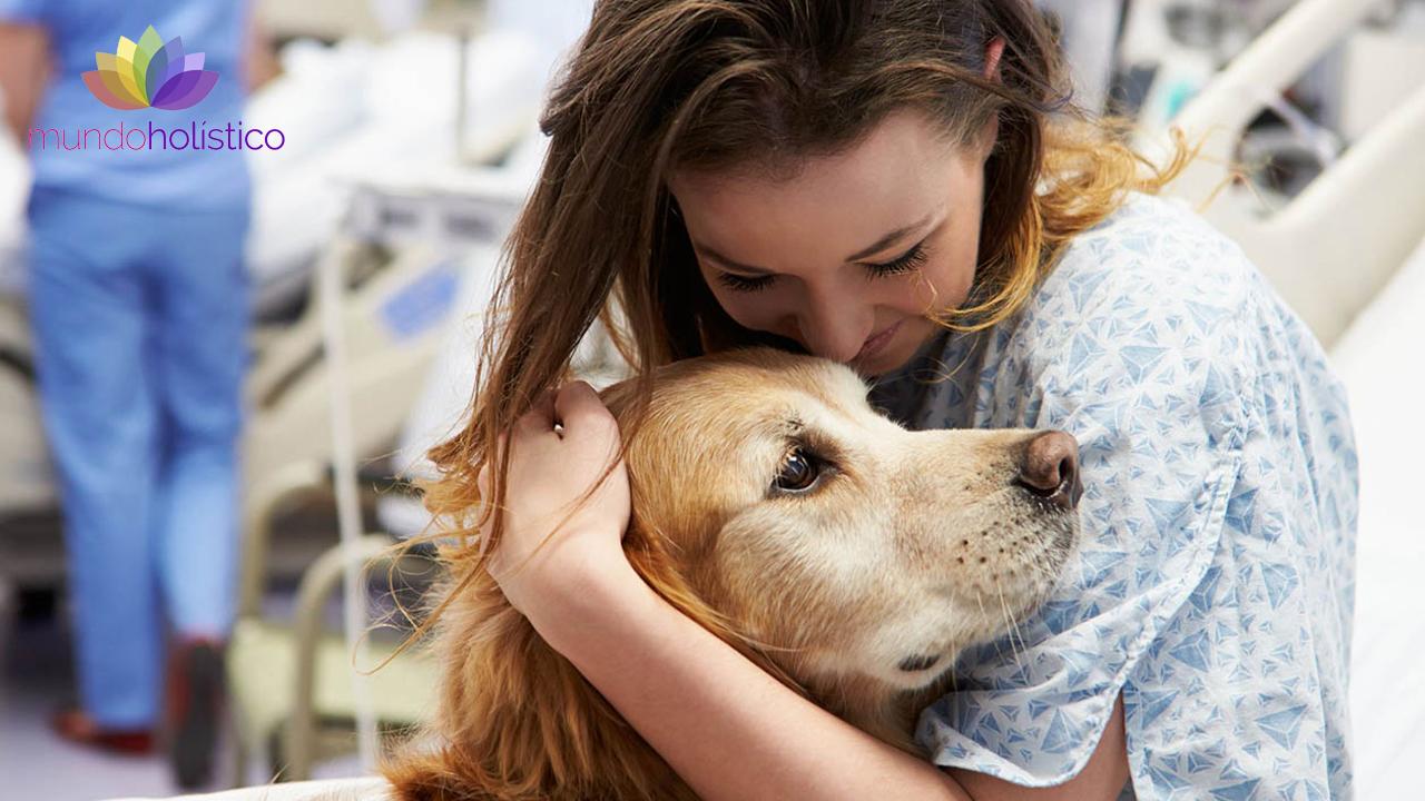 Zooterapia: Terapia con animales