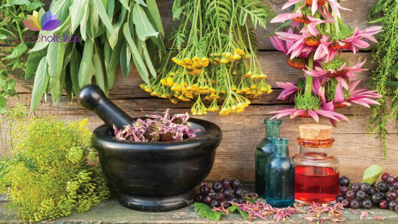 ¿Qué es la Herbolaria?
