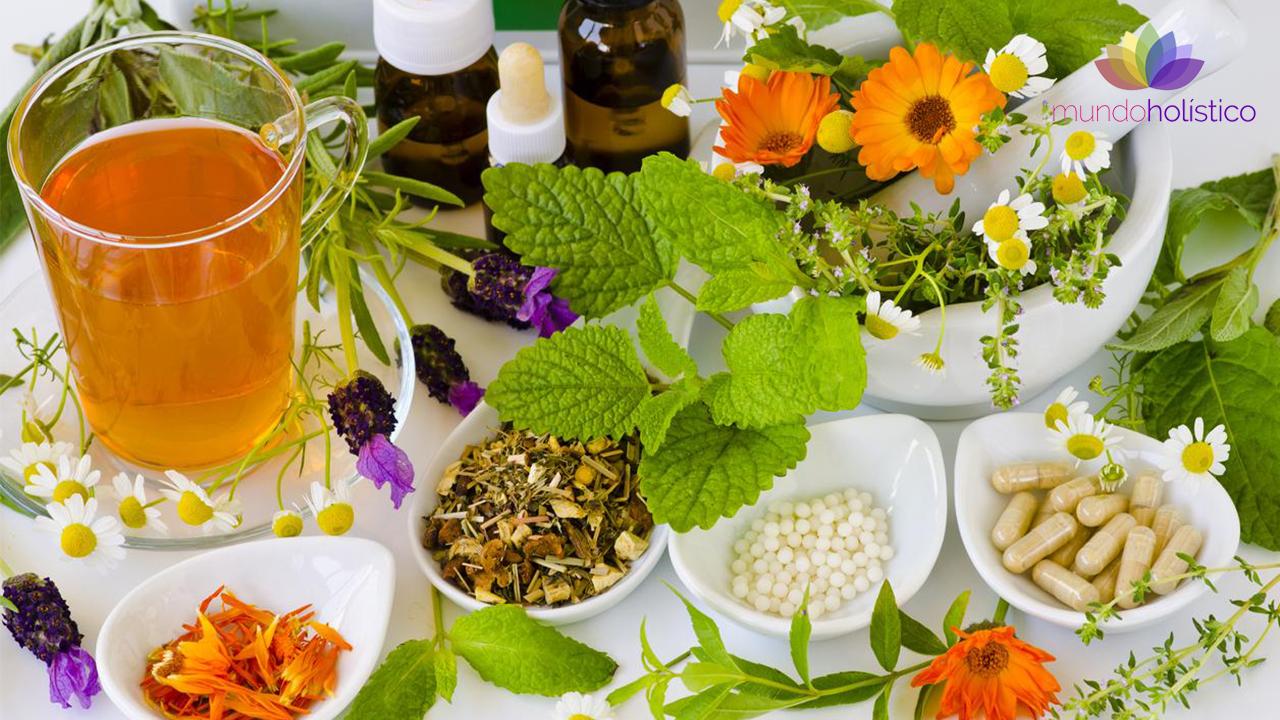 Plantas Medicinales: De la tradición a la ciencia